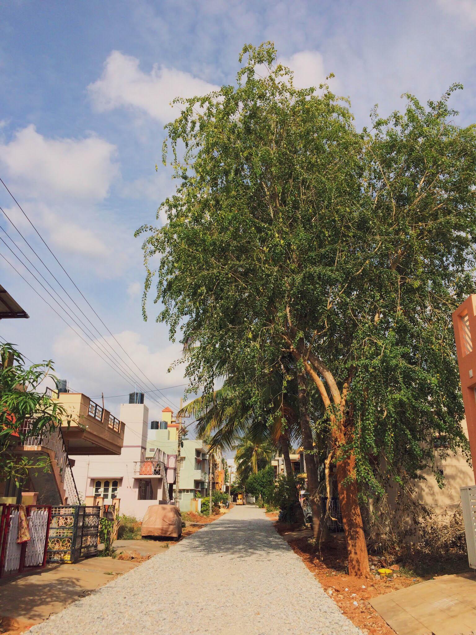 street-mysore